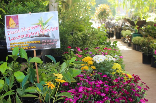 The flower market battaramulla yamu for Sri lankan landscaping plants