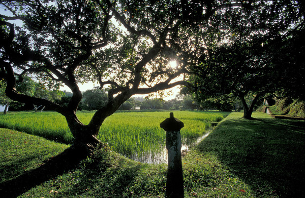 The rice paddies by the lake at sunrise.